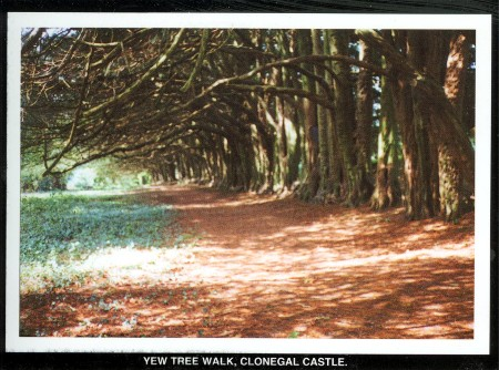 Yew Walk Postcard