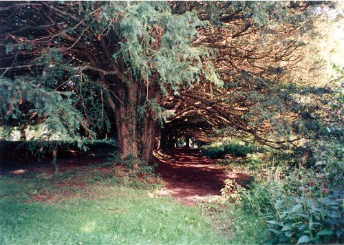 Another Yew Walk View